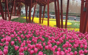 Tulip season at Jing'An Sculpture Park