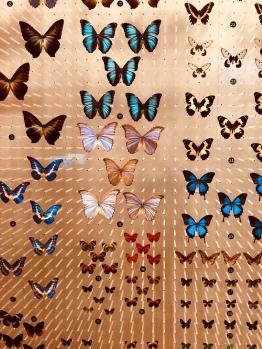 Butterflies, Natural History Museum
